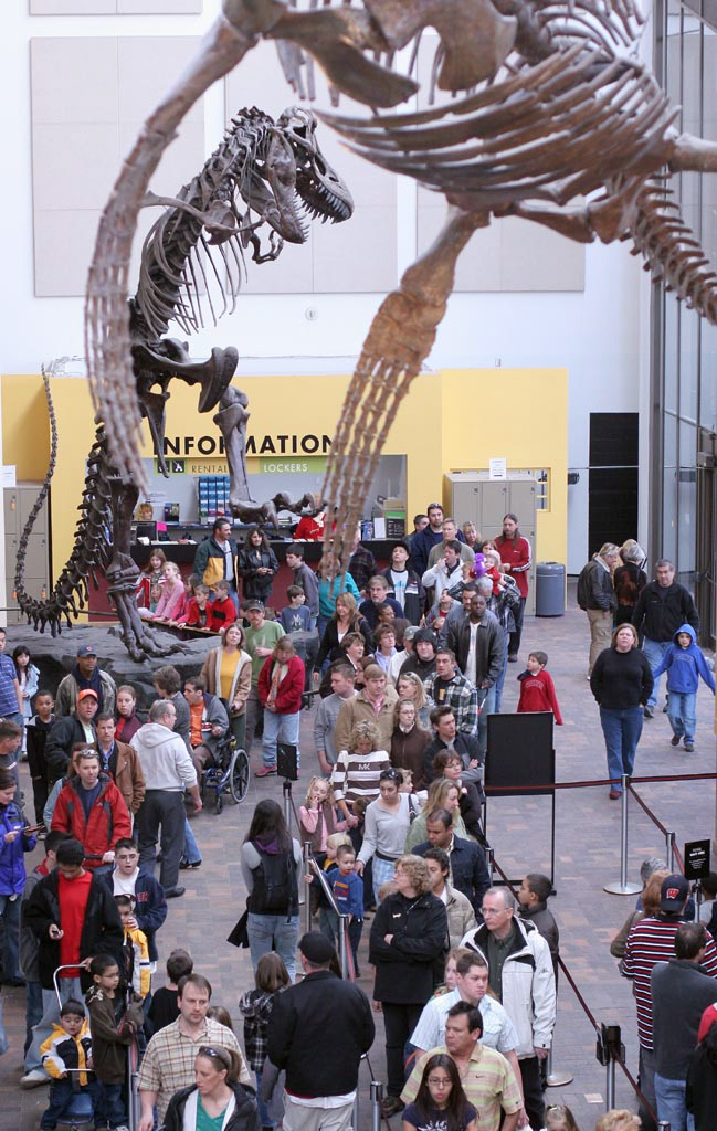 T-Rex_Skeleton_-_Denver_Museum_of_Nature.jpg